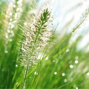 Natural Field Grass